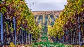 Crisis climática: un impacto radical en la producción vitivinícola