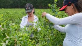 Agricultura destinará más de 29 millones de pesos para desarrollos productivos de mujeres cuyanas