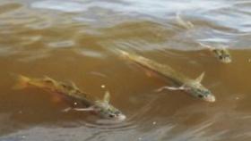 La provincia de Buenos Aires habilita la pesca comercial de pejerrey