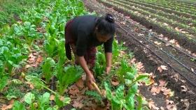 Una producción agroecológica en manos de familias campesinas