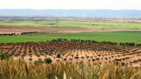 Holanda acuerda proporcionar educación agrícola gratuita y conocimiento técnico a Sri Lanka