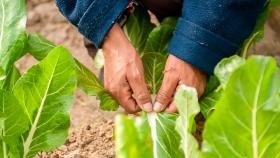 El INTA impulsa invernaderos escuelas para promover la soberanía alimentaria