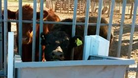 La tecnología al servicio de la ganadería