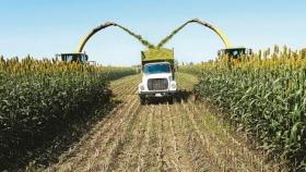 Silaje de maíz en la intensificación ganadera
