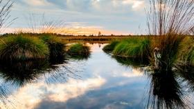 Medio ambiente: América Latina lanza un plan para restaurar los ecosistemas dañados