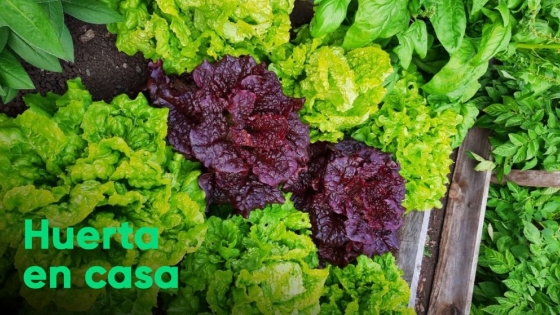 Huerta en casa: cómo cultivar verduras de hoja