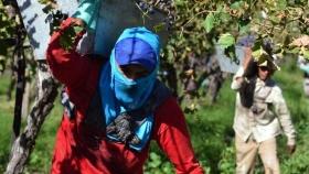 La vitivinicultura es el complejo exportador que más empleo genera