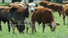 Uruguay proyecta más participación en el mercado global de la carne y pone el foco en lo ambiental