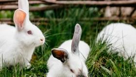 Habrá faena de especies menores en escuelas agrotécnicas de la provincia de Entre Ríos