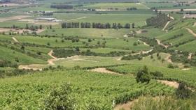 El IICA y Chile analizan los ejes claves para impulsar el desarrollo rural