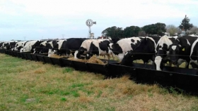 Comederos para vacas de tambo y modelos a medida