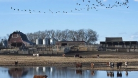 Construyendo una cosecha de trigo de 259 bushel/acre