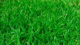¿Qué es la grama?
