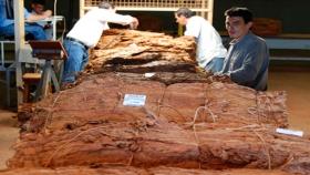 Más del 90% del tabaco producido en Misiones se procesará dentro de la provincia