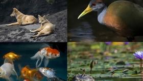 América Latina presenta un alarmante declive en biodiversidad, advierte WWF