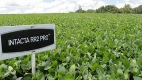 Bayer suspende su negocio de semillas y biotecnología de soja en el país