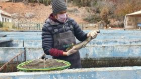 Actividad acuícola nacional como un eje productivo con grandes perspectivas de crecimiento
