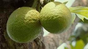 Cinco frutas y hortalizas menos conocidas, pero sorprendentemente nutritivas