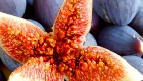 Cómo germinar una semilla de higo