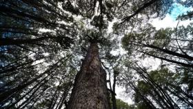 El Gobierno nacional lanzó una campaña de prevención de incendios forestales