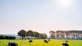 Insumos esenciales para garantizar el cuidado óptimo del ganado