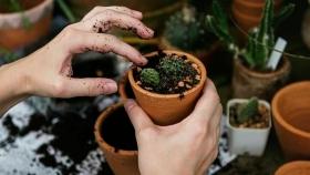 Cómo hacer y plantar esquejes: trucos para conseguirlo fácilmente