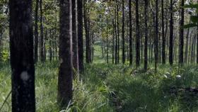 La cadena forestal se reunió con Kulfas y presentó inversiones por 7.000 millones de dólares