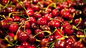 Las exportaciones de Alimentos y Bebidas Regionales crecieron más del 9%