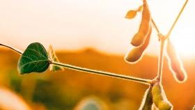 Opinión. Agroecología, Doña Petrona y militancia