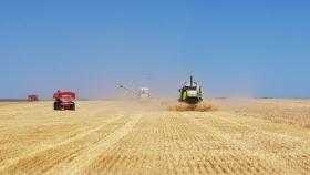 Este año la cebada argentina tiene una oportunidad de lujo gracias al cambio de reglas de juego introducido por China