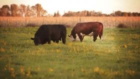 Se reabre el mercado para exportar genética bovina a Uruguay