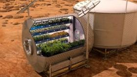 Espárragos, la verdura que alimentará a diario a los astronautas en Marte