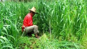 INIA presenta variedad de avena forrajera precoz con potencial de producción de 61t/ha