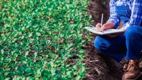 Sube el precio internacional de fertilizantes y herbicidas