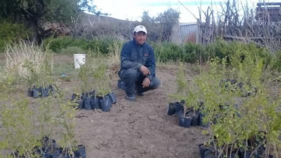 Bosques energéticos para producción de leña en la Meseta Central de Chubut
