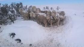 Cómo actuar frente a nevadas intensas para evitar las pérdidas ganaderas