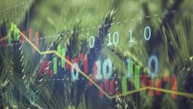 Mercado de granos: trigo y soja cotizan el alza en la Bolsa de Chicago