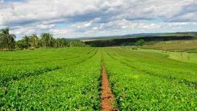 Dos nuevas empresas obtienen el sello de Calidad Alimentos Argentinos, una Elección Natural