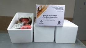 Argentina exporta moscas del mediterráneo estériles a Bolivia y Chile