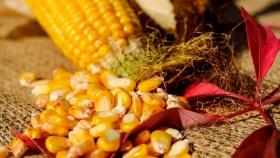 El maíz fue el cultivo con mejor comportamiento en el mercado local