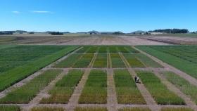 Pellet de compost, una nueva estrategia de fertilización biológica que aumentaría el rendimiento del trigo