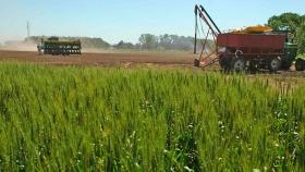 Diseñan una app de comercialización de granos, seguros agrícolas y contratistas