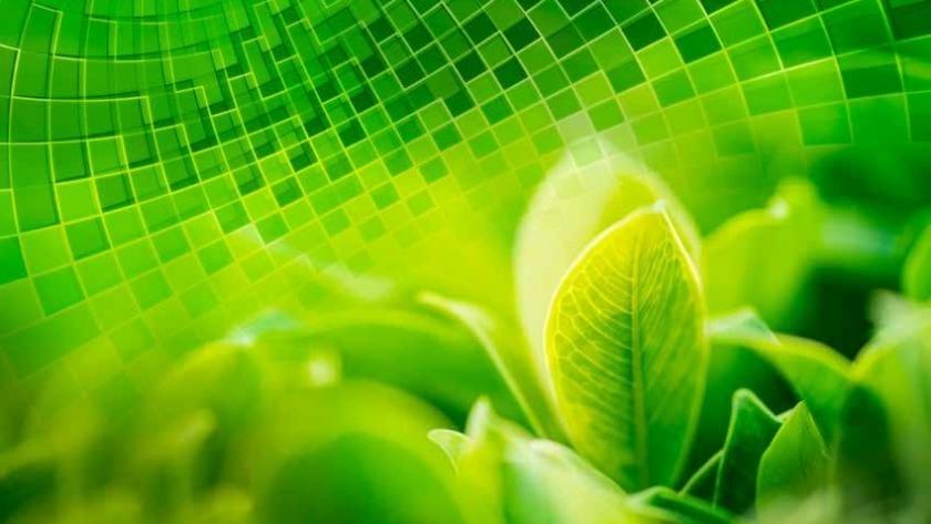 Agricultura sostenible: crece el uso de bioinsumos en la producción agrícola