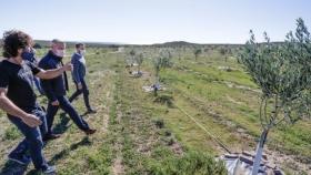 Un plan para desarrollar la industria del olivo en Chubut