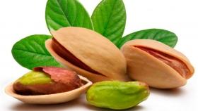San Rafael, Alvear y Lavalle son los principales productores de pistacho en Mendoza