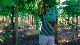 Consejos al productor de uva para mesa, desecar, mosto o elaboración de vinos