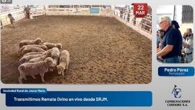 Remate especial de Ovinos en la SRJM: muy buenos precios, en algunos casos,