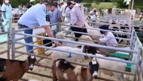 Con apoyo crediticio del Ifai y el Agro se realizó exitosamente el primer remate de ganado menor 100% misionero