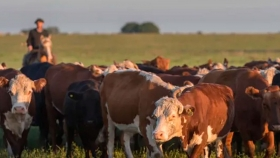 Milano sobre la tendencia de los precios de la ganadería: Obligan a nuestros productores a invertir en lo que saben