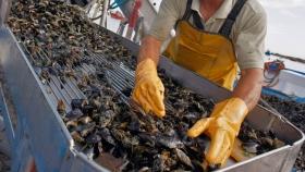 Tierra del Fuego: Newsan Food invertirá US$200 millones en la producción de mejillones